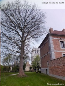 Saint-Omer Motte Castrale_GF