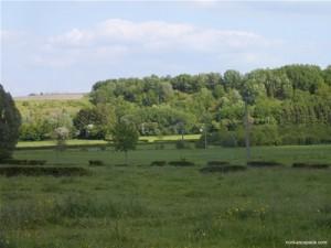 Photographie de la Fagne, paysage de cette partie de l'avesnois, constitué de patures et de tourbières traversées par de petites rivières.