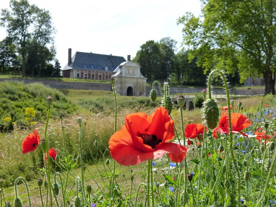 Photographie de la citadelle d'Arras et en premier plan des coquelicots (poppys)
