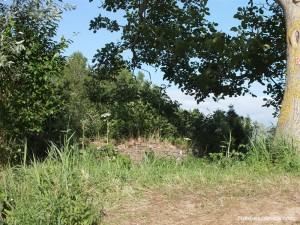 Les vestige du moulin dit de l'Aile, car implanté dans le Marais de l'Aile. Il servait à drainer l'eau.