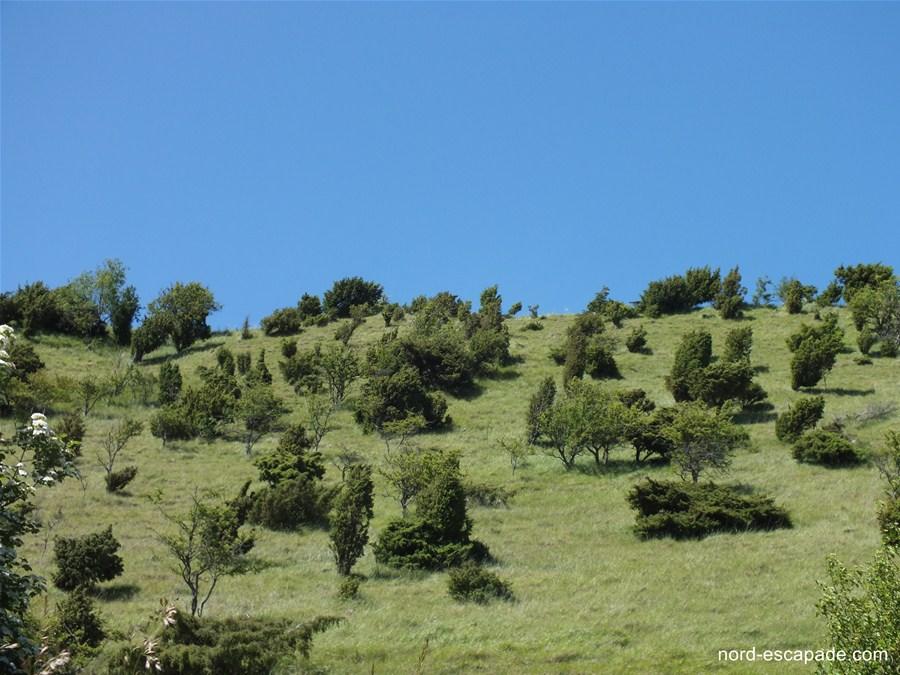 Les pelouses calcicoles