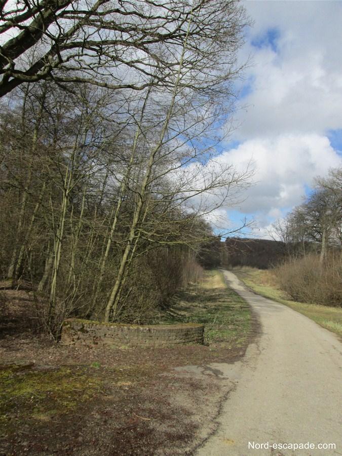 L'un des chemins de la forêt de Clairmarais, aux abords du lac d'Harchelles