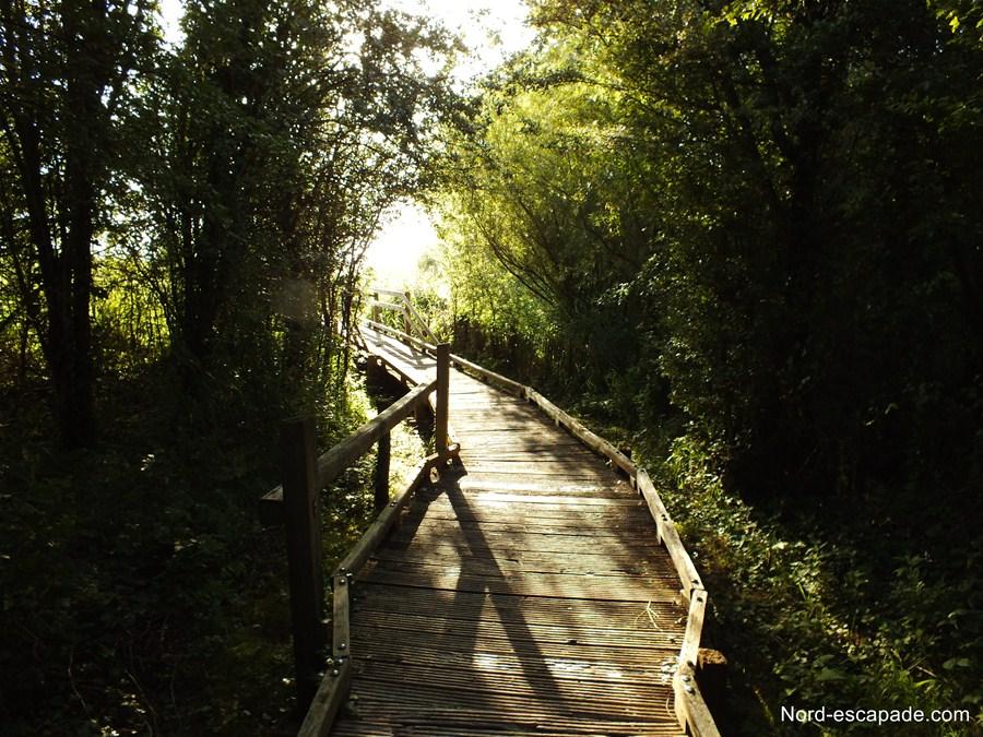 Les chemins de la réserve du Romelaere
