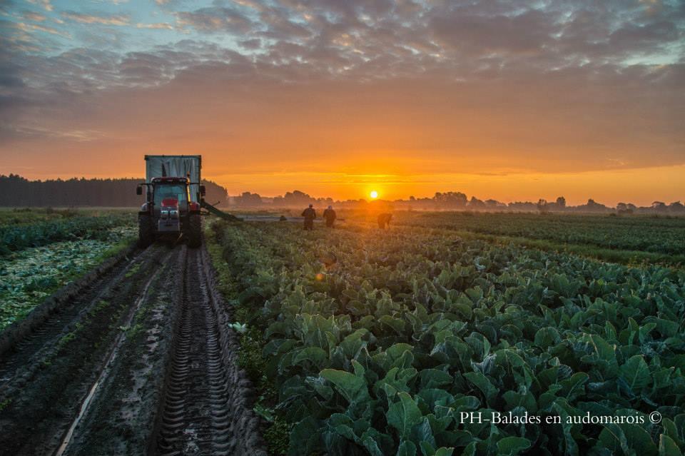 Photo travail dans les champs de saint omer
